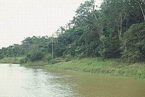 Amazon River created by משתמש:בן הטבע