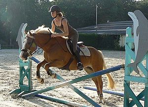 A Haflinger horse jumping an obstacle