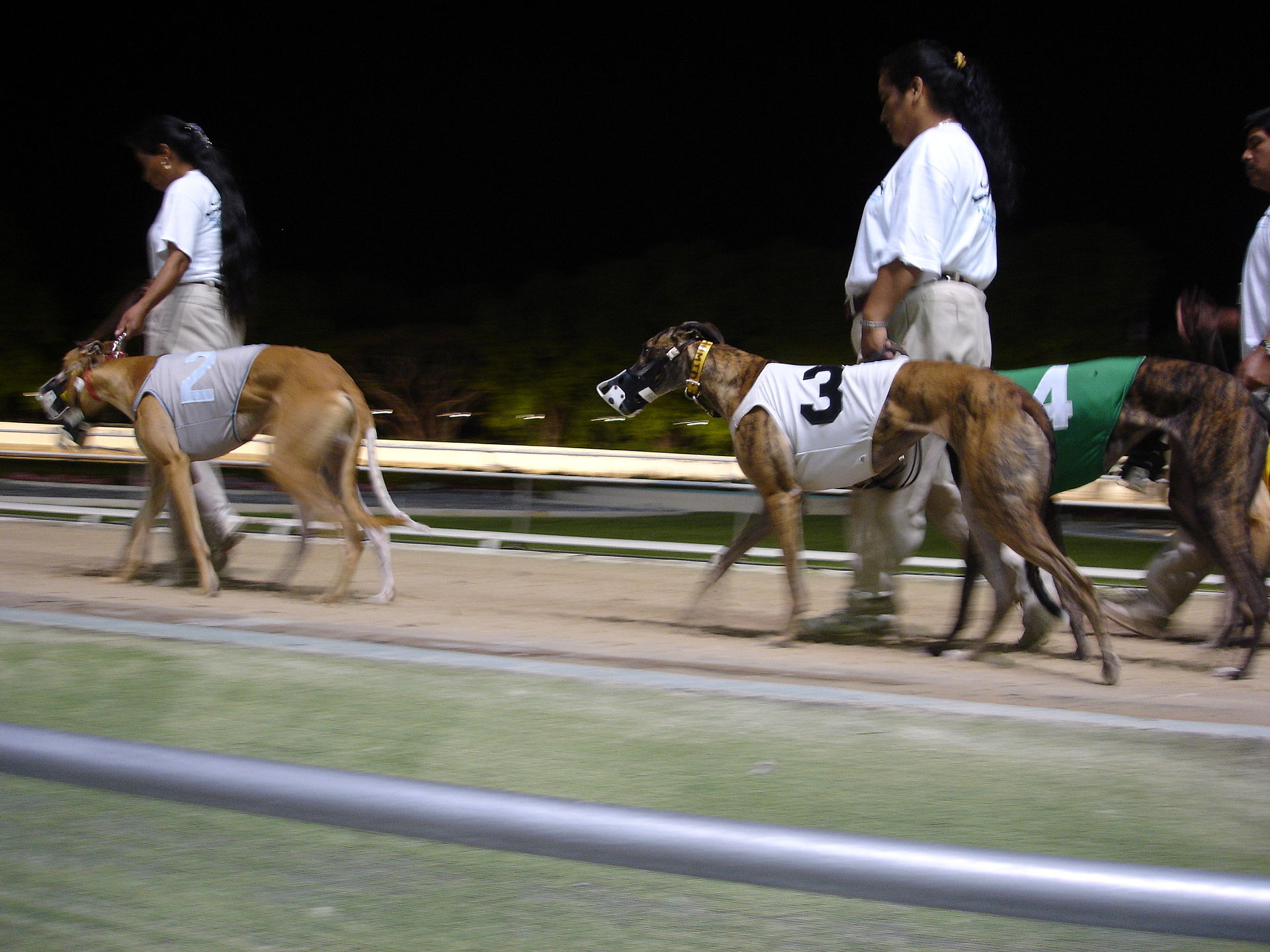Greyhound racing  Wikipedia