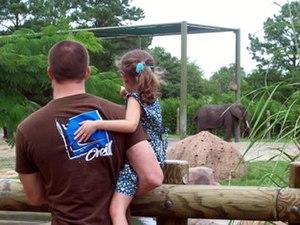 Summer zoo