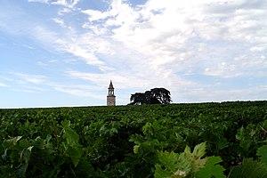 Bégédan vineyards in the Haut-Medoc of Bordeaux.