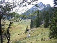 Bayerische Wildalm  Wikipedia