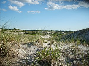 Dunes at Sandy Neck Beach, West Barnstable