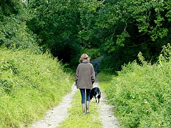English: Walking the dog on Honey Pot Lane Out...