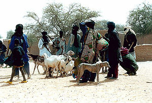 Sahel people with livestock and azawakh dogs