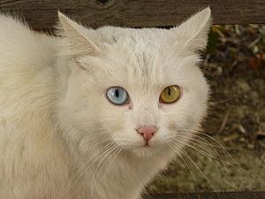 Cat Briciola with pretty and different colour ...