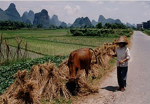 Rice production in China