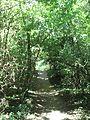 Ile De La Table Ronde : table, ronde, Category:Île, Table-Ronde, Wikimedia, Commons