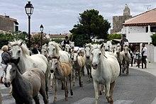 Saintes Maries De La Mer Reisefhrer Auf Wikivoyage