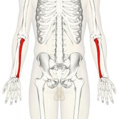 Ulnar Nerve Diagram Meter Socket Wiring Ulna Wikipedia