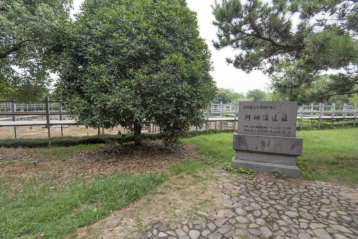 河姆渡遺址 - 維基百科,自由的百科全書