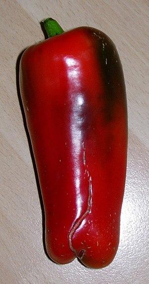 Capsicum annuum ripe fruit