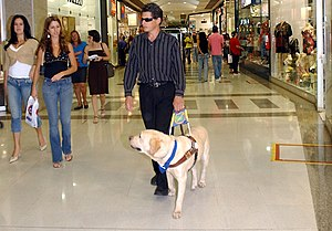 A blind man is led by his guide dog in Brasíli...
