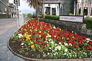 English: Flower bed Pretty spring flowers in K...