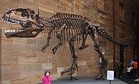 Giganotosaurius (2/5)