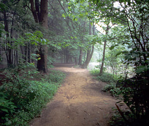 A trail at Jacobsburg Environmental Education ...