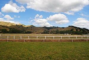 Rural area outside of Paeroa, New Zealand