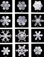Snow flakes by Wilson Bentley. Bentley was a b...