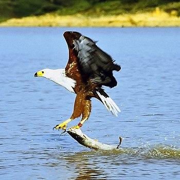 A Bird's-Eye View of Fishing (2/6)