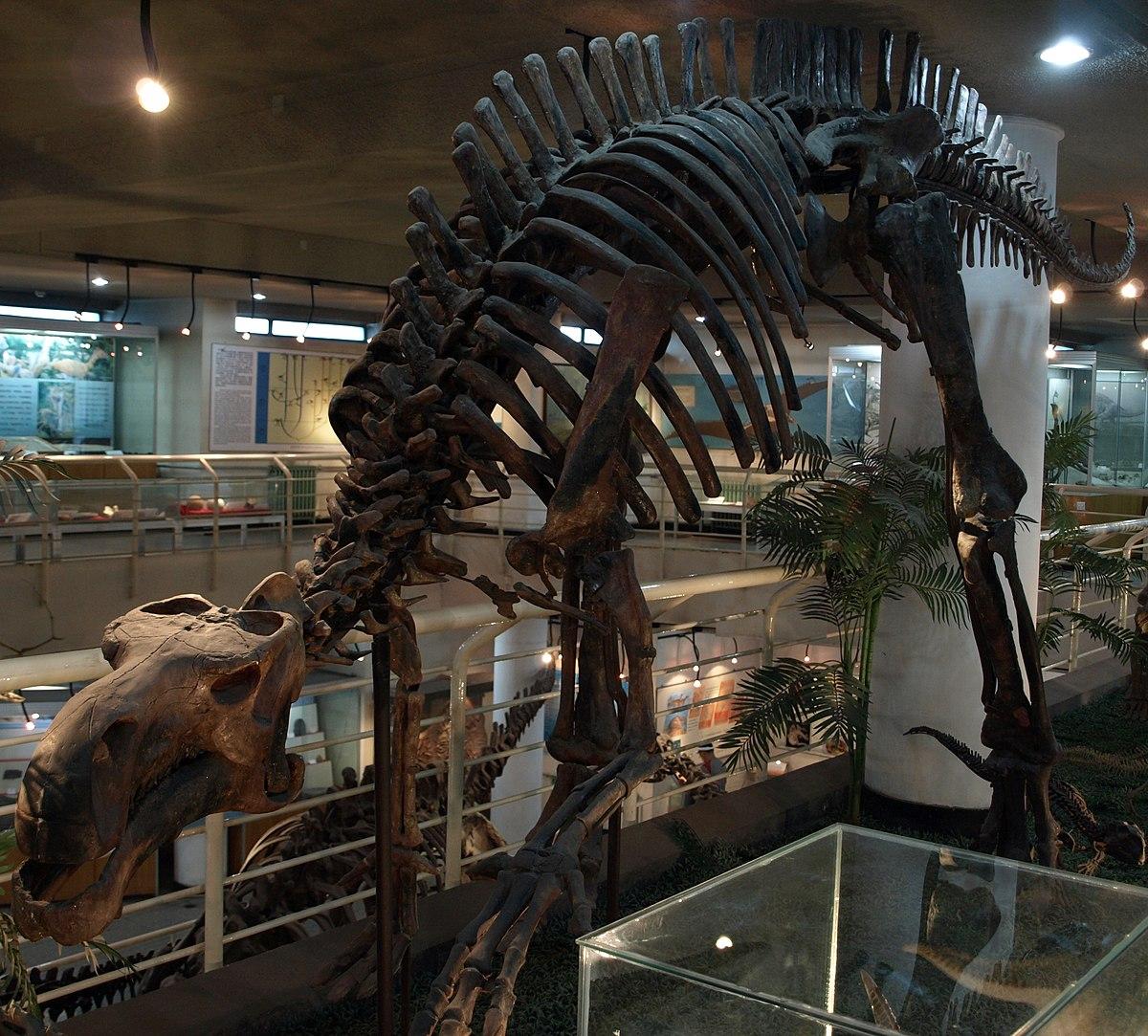 Probactrosaurus Wikipedia