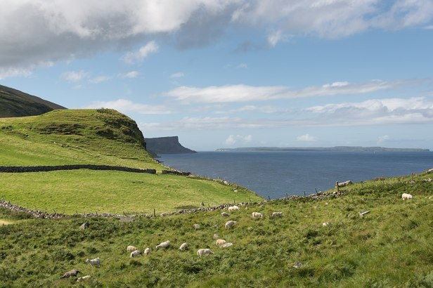 Sheep - Torr Head, Ballycastle, Northern Ireland, UK - August 15, 2017