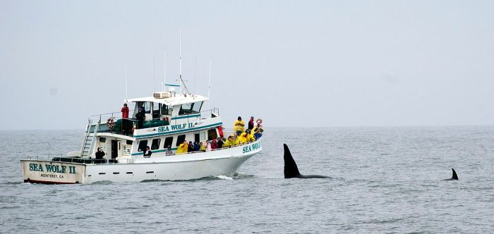 Watching Orcas (Monterey, 2007)