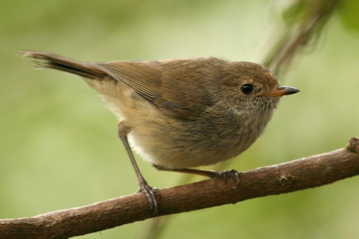 Brown Birds Wisconsin