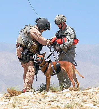 Dog handler Sgt. Michael Hile prepares his par...