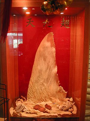 A dried shark fin on display with dried sea cu...