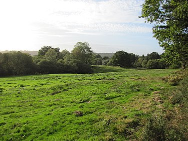 New Forest, Hampshire (460998) (9455070055) .jpg