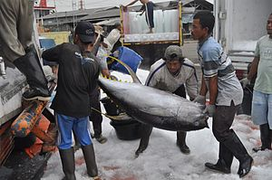 English: Yellowfin tuna Thunnus albacares, loa...