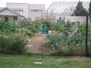 community garden, Denver CO