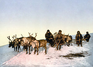 English: Traveling by reindeer, Arkhangelsk, R...