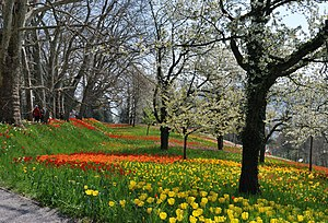 The Spring path at the island of Mainau during...