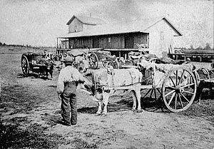 Red River ox cart at railway station