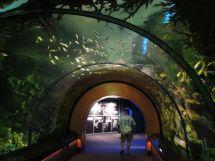 Sea Aquarium Orlando Florida