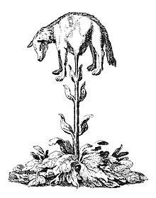 Vegetable lamb (Lee, 1887).jpg