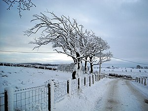 English: Wind Swept Trees in Winter