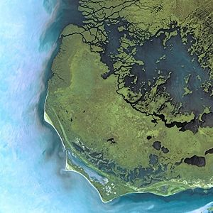 Everglades National Park by SPOT Satellite