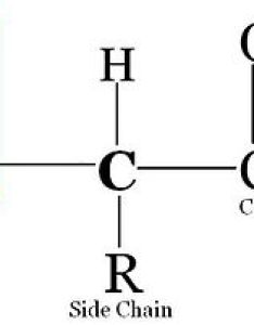 Amino acid structure also medical physiology basic biochemistry acids and proteins rh enbooks