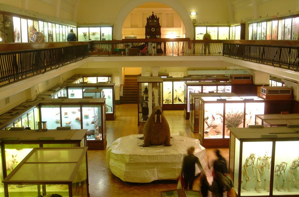 Horniman Museum - Fæ