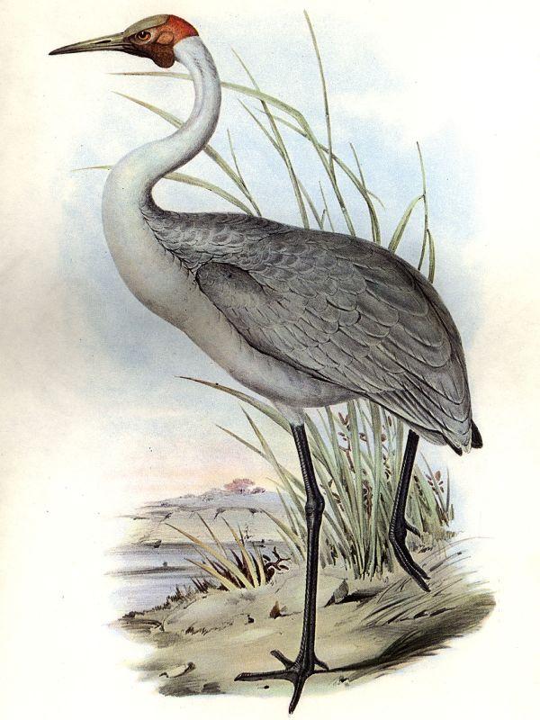 Cadell And Blyth Floodplains - Wikipedia