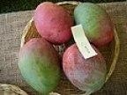 Mango Alice Asit fs.jpg