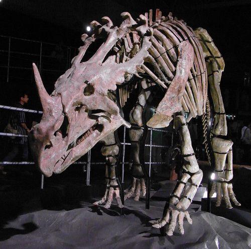 Sinoceratops skeleton.jpg