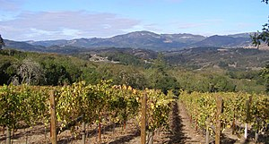 "Original description: ""sonoma mtn vineyar..."