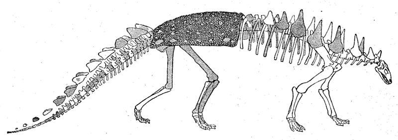 File:Polacanthus skeleton.jpg