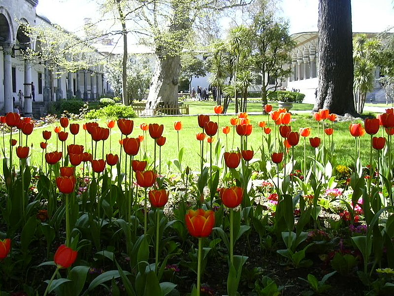 Ficheiro:Tulips-Topkapı Palace.jpg