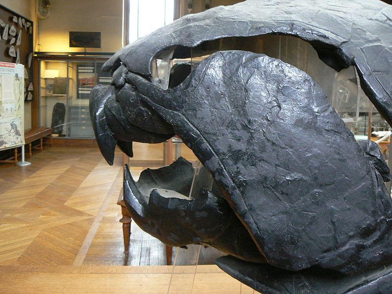 Dunkleosteus - lebka