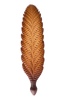 Image of Charnia from Wikipedia