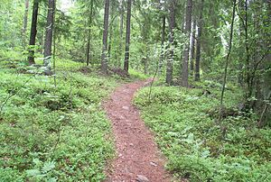 English: A forest path in southern Finland. Su...